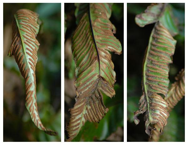 Long winter ferns